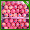 red qinguan apples shanxi red qinguan apples for India
