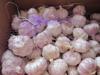 2015 new crop fresh white garlic for sale