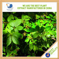 Surtidor de China pura Glycyrrhiza Glabra de raíz de regaliz