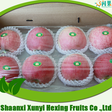 2015 Grade A promotional crop Best Quality Fresh Red Fuji Apple