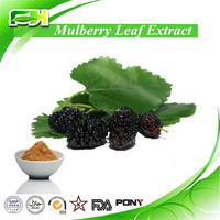 Best Price Folium Mori P.E., Folium Mori Powder, Folium Mori Extract