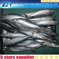 Biens d'exportation de haute qualité pacifique maquereau poisson congelé