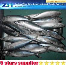 High quality export goods pacific mackerel frozen fish