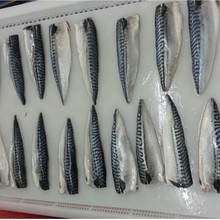 argentine Seafrozen mackerel fish fillets and prices