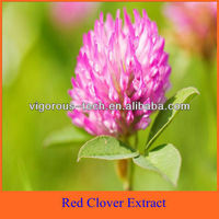 Hot sale Isoflavone 2.5% 8% 20% 40% Red Clover Extract
