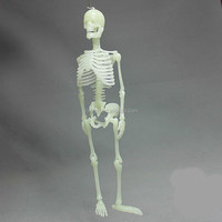 Custom people skeleton toys,Lifelike human skeleton toy figure,OEM plastic small skeleton toy figures