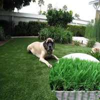 Anti Corrosive Synthetic Grass For Pet Animals