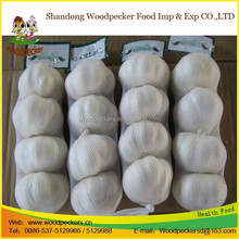China garlic farm white garlic packed in 10kgs/ctn