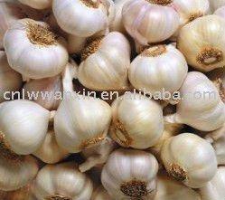2011 chinese indian fresh garlic