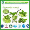 GMP manufacture supply high clss Peppermint Extract in herbal extract