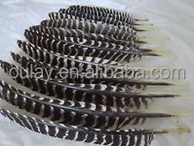 28cm real turkey feather with striped fletchings black and white