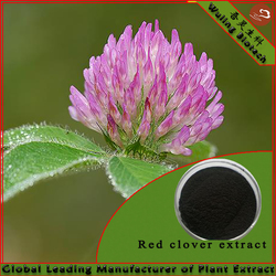 GMP factory supply high quality Red clover extract