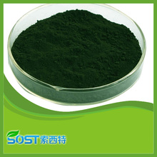 Cuidado de la salud Natural ingrediente 95% pureza clorofila polvo