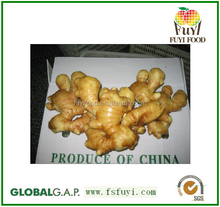 buyer of ginger