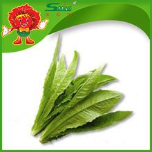 Wholesale leaf vegetables lettuce/spinach