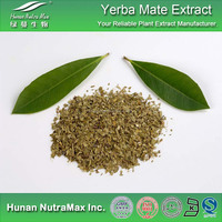 High Quality Yerba Mate Extract,Yerba Mate Extract Powder,Yerba Mate P.E.4:1-20:1