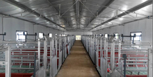 hot dip galvanized Q235 steel tube pig sow limit crate for exporting