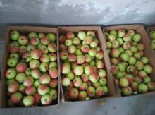 best price red gala apple juicy apples for sale