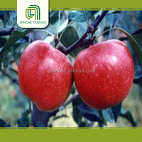 buy fresh Qinguan apples wholesale