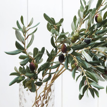 hydroxytyrosol (extracted from olive leaf), olive leaf extract oleuropein powder