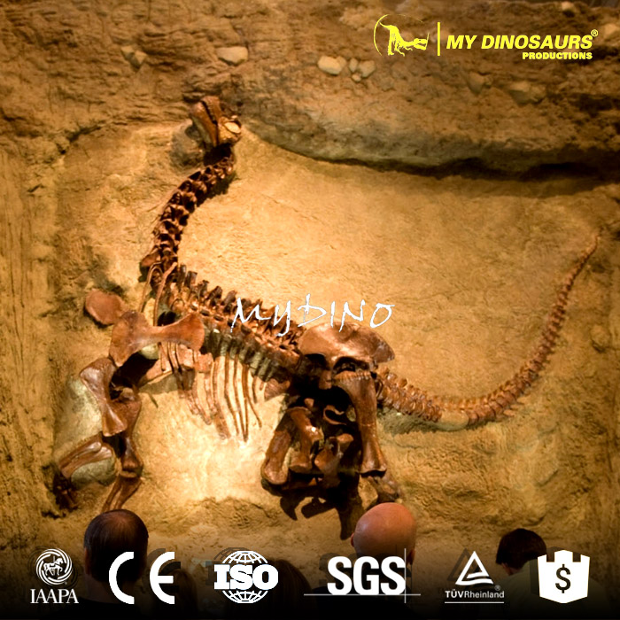 dinos fossil wall3.jpg