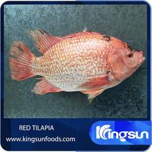 Frozen red tilapia fish