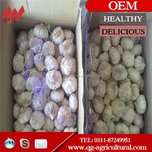 New Fresh White Natural Solo Garlic