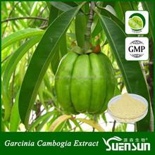 High quality garcinia cambogia extract 80% hydroxycitric acid