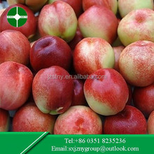 new arrival Chinese fresh red nectarine in the lowest price