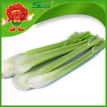 Organic green vegetables natural celery for sale