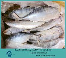FROZEN SARDA BONITO FISH WHOLE ROUND TUNA