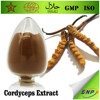 GMP ISO Natural Cordyceps Sinensis Extract Powder Polysaccharide