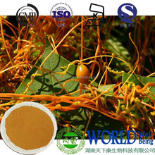 factory produce 10:1 natural dodder extract powder Cuscuta chinensis Lam dodder seeds extract