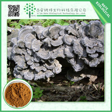 China wholesale high quality yunzhi mushroom extract 30%-50%