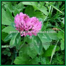 Isoflavons 20% / Red Clover Extract