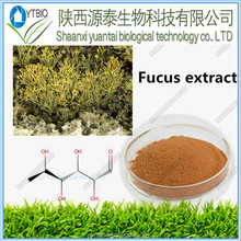 Hot Sale Products Natural Fucus Vesiculosus Extract powder10:1