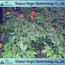 Low pesticide American ginseng Dried ginseng american ginseng extract