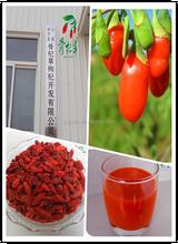 Preserved Fruit Ningxia Dry Goji Berry ,wholesale china goji berry ,Certified Organic Goji Berries