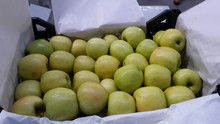 The Best Quality Of Turkish Golden delicious apple, New seazon