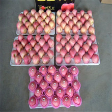 Wholesale Yantai Fresh Red Fuji Apple 20kg Carton