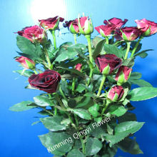 Fresh cut flowers Spray rose flowers wholesale