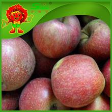 wholesale price fuji apple exporter in china