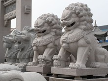 live lion stone animal carving