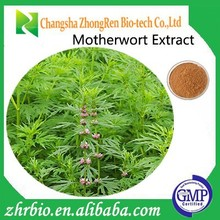 Herbal products High Quality Motherwort Extract