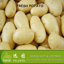 world price of fresh Holland potato
