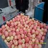 Best Price Fresh Thin Peel Fuji Apple
