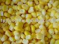 Huazhen/Jinfei dondurulmuş mısır çekirdekleri