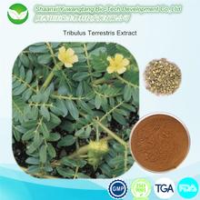 Natural herbal extract tribulus terrestris saponins