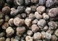 زراعة المحاصيل شكل كتلة الكمأة السوداء المجففة