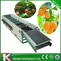 Stainless Steel Automatic apple/onion /garlic sorting machine Fruit and Vegetable Sorting Maching Fruit Sorter